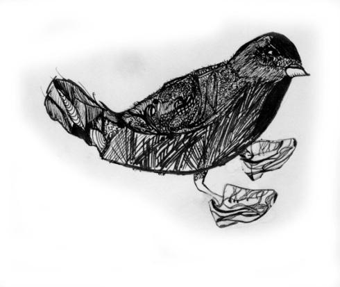 bird-jpg