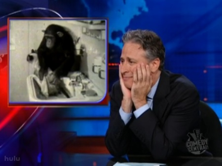 Jon Stewart Monkey Washing Cat